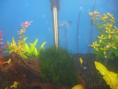 Червячки в аквариуме - P1000397.JPG