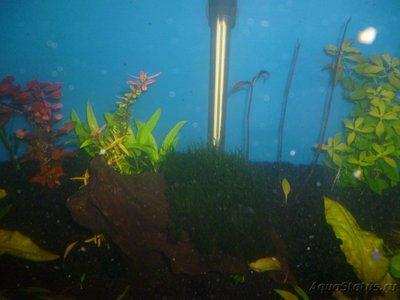 Червячки в аквариуме - P1000398.JPG
