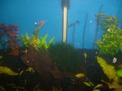 Червячки в аквариуме - P1000399.JPG