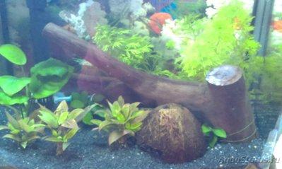 Мой аквариум Первый опыт 30 литров механик  - IMAG0457.jpg
