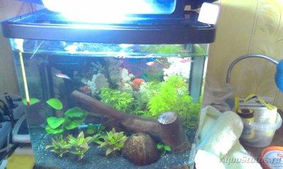 Мой аквариум Первый опыт 30 литров механик  - IMAG0454.jpg