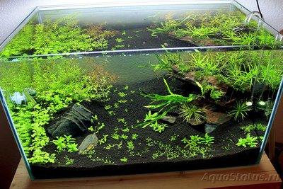 Мой аквариум Moss 110 литров Рома Beat  - IMG_1717_1.jpg