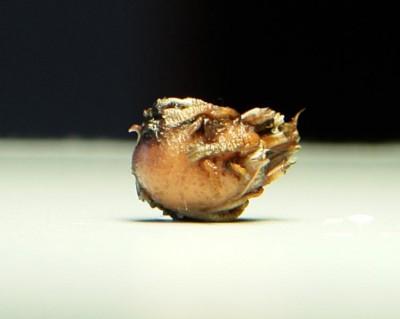 Содержание клубневого растения - Клубенек.jpg
