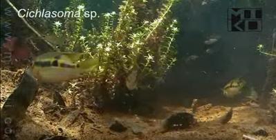Аквариумные растения - опознание растений. - Снимок экрана от 2016-03-06.png