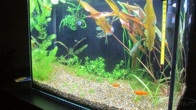 Мой аквариум 25 литров Pgambrinus  - IMG_3387.JPG