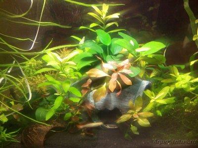 Запуск аквариума - -TJ3KtZneFo.jpg