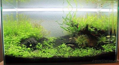 Мой аквариум Moss 110 литров Рома Beat  - IMG_1790_1.jpg