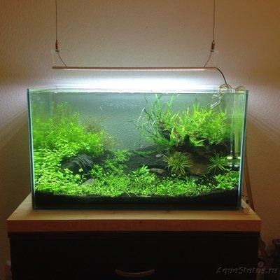Мой аквариум Moss 110 литров Рома Beat  - image.jpeg
