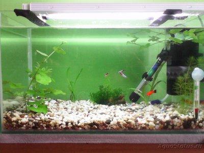 Мой первый аквариум на 30 литров delves  - IMG_20160323_125857.jpg