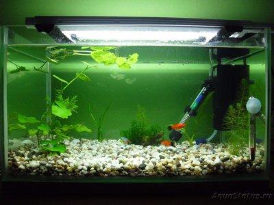 Мой первый аквариум на 30 литров delves  - SAM_0482.JPG
