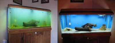 Цветение воды, зеленая вода, позеленела аквариум - Fish-tank-with-UV.jpg