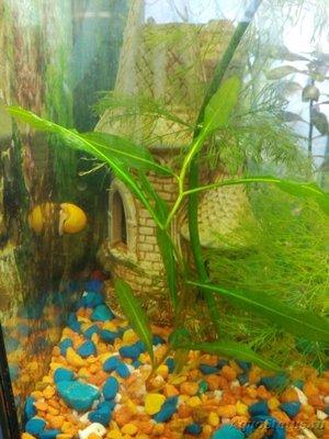 Опознание аквариумных растений - IMG_20160327_170325.jpg