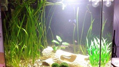 Первый аквариум 35 литров Cousin  - IMG_20160331_213524.jpg
