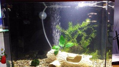 Первый аквариум 35 литров Cousin  - IMG_20160403_193800.jpg