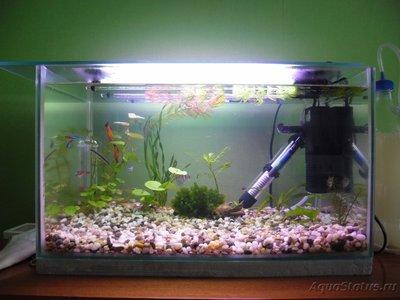 Мой первый аквариум на 30 литров delves  - SAM_0627.JPG