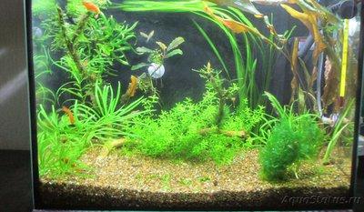 Мой аквариум 25 литров Pgambrinus  - IMG_3394.JPG