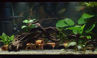 Планирование аквариума Дельфинарий на 200 литров - _DSC4333.jpg
