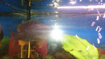 Помогите опознать рыбку опознание рыб  - 1462134729197305816219.jpg