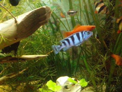Помогите опознать рыбку опознание рыб  - IMG_20160510_223059.jpg