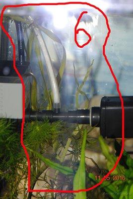 Аквариумные растения - опознание растений. - DSC_0451.JPG