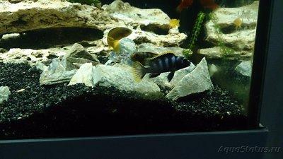 Помогите опознать рыбку опознание рыб  - 1.jpg