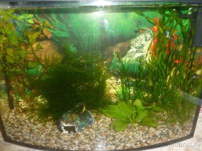 Мой аквариум на 30 литров 666  - P1020683.JPG