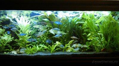 Опознание аквариумных растений - DSC_0214.JPG