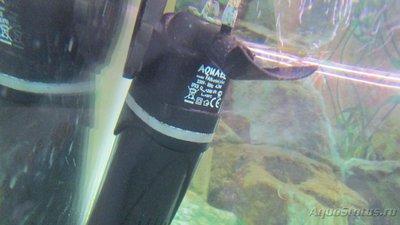 Перезапуск аквариума - IMG_3326.JPG