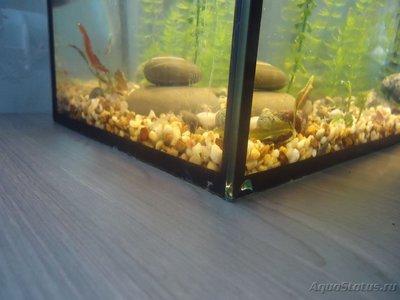 Опасен ли скол в углу аквариума? - DSC02015.JPG