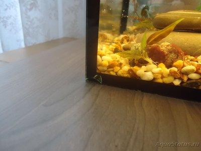 Опасен ли скол в углу аквариума? - DSC02007.JPG