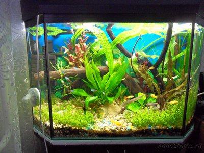 Коряга в аквариуме - SDC13354.JPG