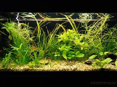 Фото аквариумов объемом от 101 до 250 литров - DSC03521.JPG