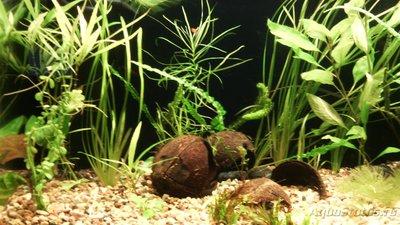 Фото аквариумов объемом от 101 до 250 литров - IMG_20151026_192204.jpg