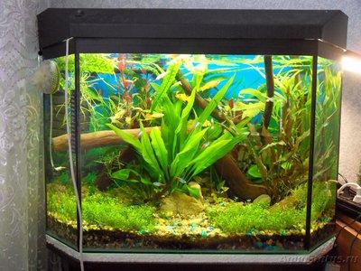 Фото аквариумов объемом от 101 до 250 литров - SDC13372.JPG