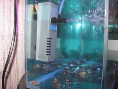 Перезапуск аквариума - IMG_1143.JPG