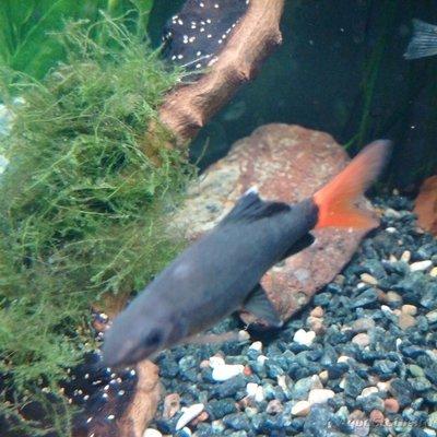 Помогите опознать рыбку опознание рыб  - IMG_20160814_191428.jpg