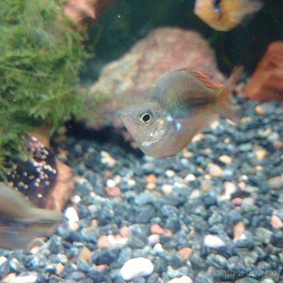 Помогите опознать рыбку опознание рыб  - IMG_20160818_222725.jpg