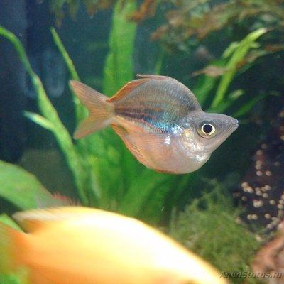Помогите опознать рыбку опознание рыб  - IMG_20160818_224954.jpg