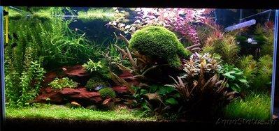 Фото аквариумов объемом от 101 до 250 литров - IMG_20160711_232312.jpg