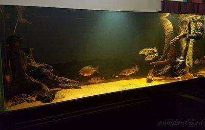 Фото аквариумов объемом свыше 401 литра - image.jpeg