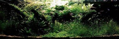 Фото аквариумов объемом от 101 до 250 литров - IMG_20160831_232905.JPG