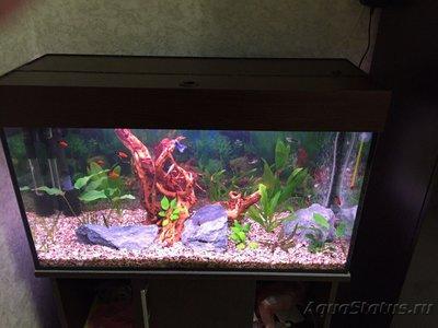 Первый аквариум 100 литров Евгений Аралов  - 3.jpg