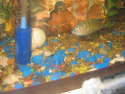 Помогите опознать рыбку опознание рыб  - IMG_0002[1].JPG