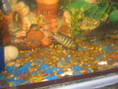 Помогите опознать рыбку опознание рыб  - IMG_0003[1].JPG