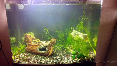 Мой аквариум 60 литров Акварина  - DSC_0454.jpg