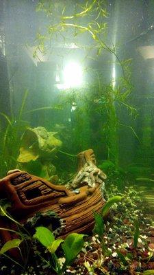 Мой аквариум 60 литров Акварина  - DSC_0461.jpg