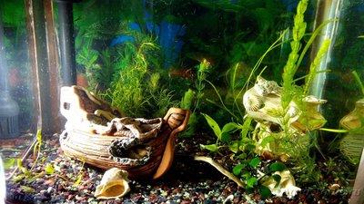 Мой аквариум 60 литров Акварина  - DSC_0528.jpg