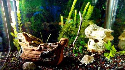 Мой аквариум 60 литров Акварина  - DSC_0632.jpg