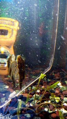 Мой аквариум 60 литров Акварина  - DSC_0585.jpg