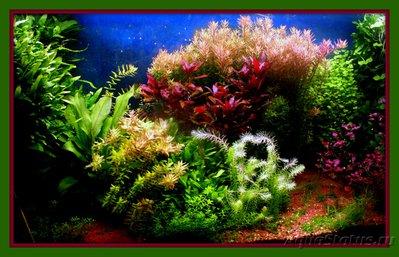 Фото аквариумов объемом от 101 до 250 литров - PICT0198.JPG